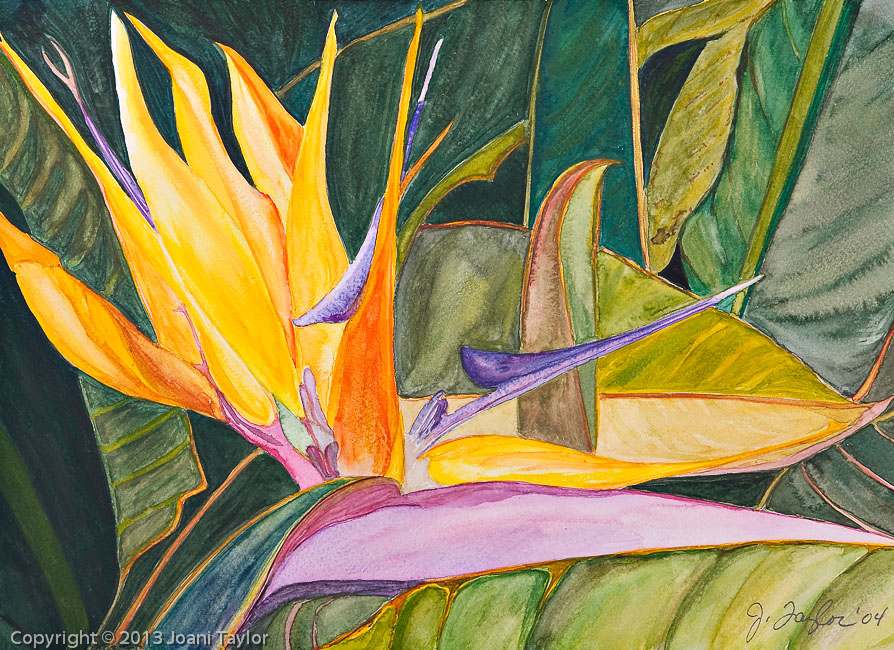 Bird of Paradise II